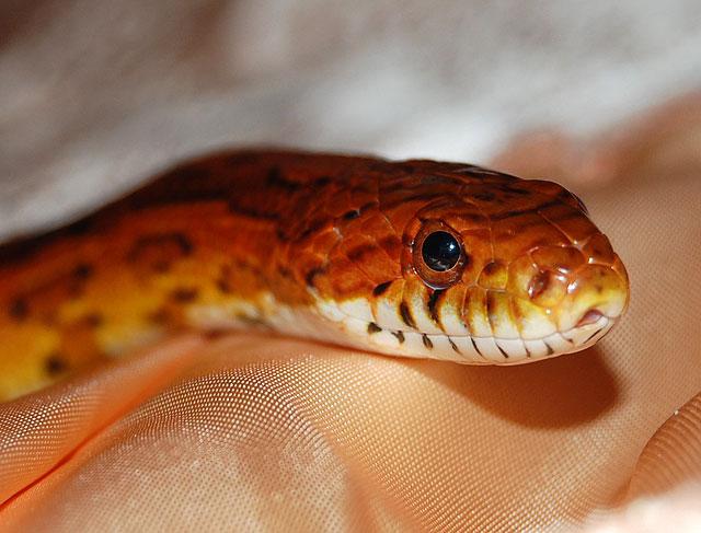 Родственная душа: пропагандисты из «Нашей Нивы» похвалились, что приручили змею